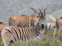African Game Lodge - Montagu Accommodation