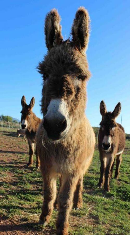 Eseltjiesrus Donkey Sanctuary - McGregor